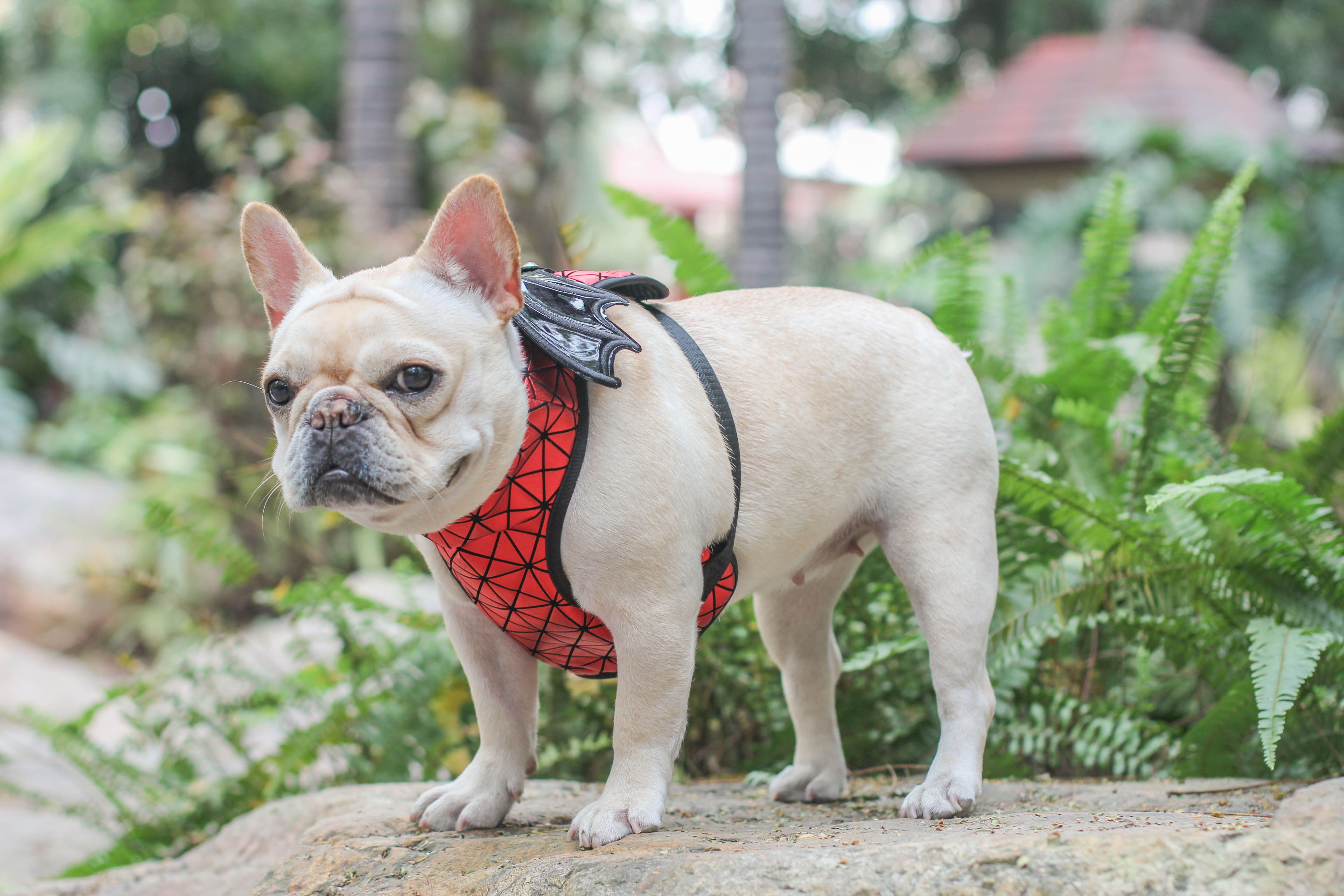 French Bulldog Costumes Batman By Frenchiely Frenchieuk