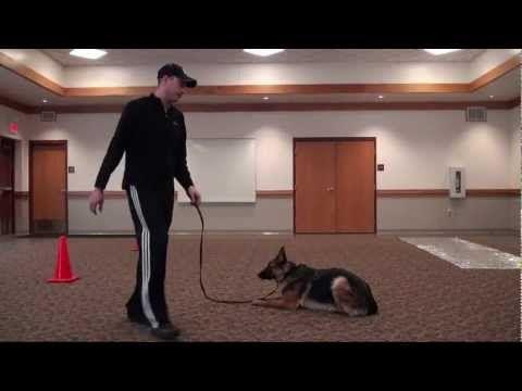 Bailey German Shepherd Boot Camp Dog Training Video Minnesota