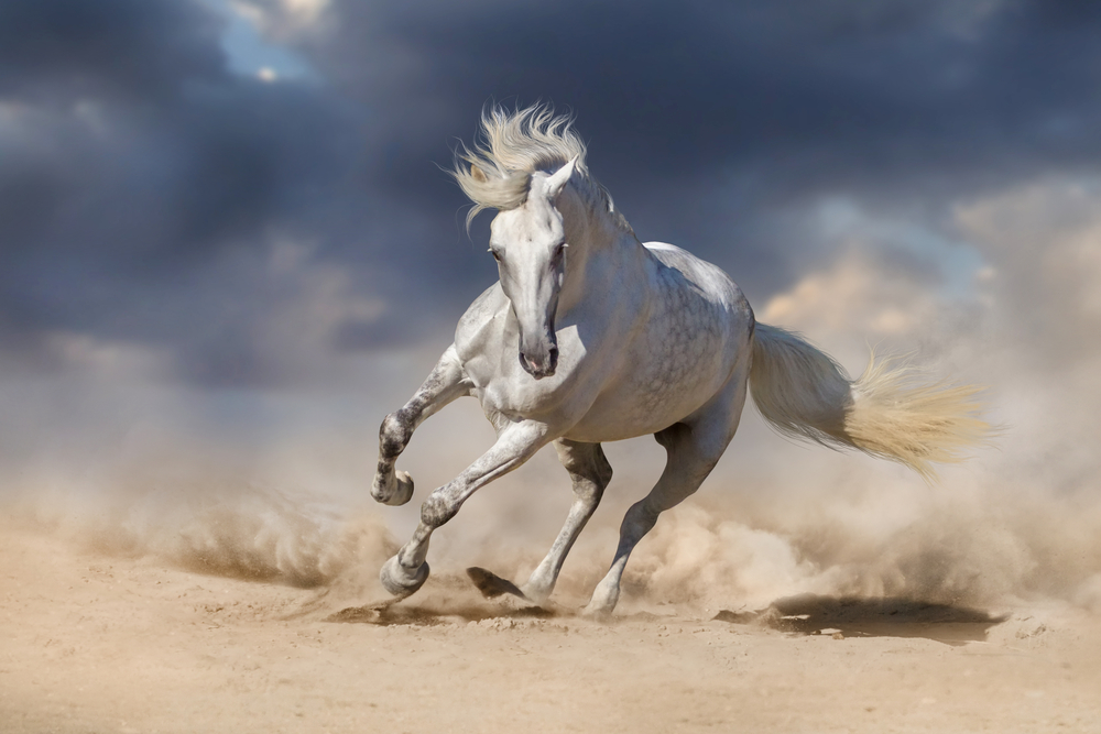Beautiful White Horse Run Desert Against Horses Andalusian Horse Horse Mane