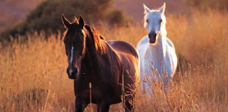 Google Image Result for http://horsesunlimitedrescueandeducationcenter.webstarts.com/uploads/horses.jpg