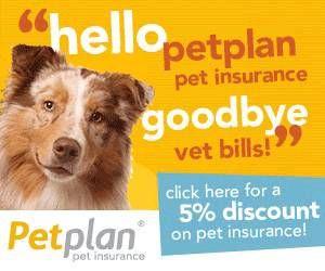 Basic Dog Training Tips Pet Insurance Reviews Pet Insurance Cost Pet Insurance