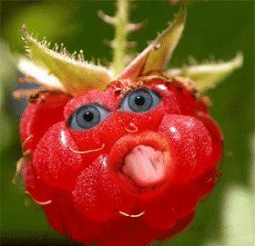 Freche Früchte