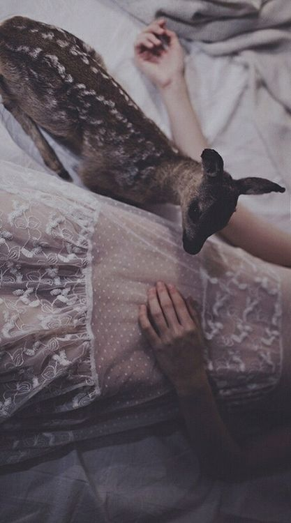 Beautiful. Lace and fawn