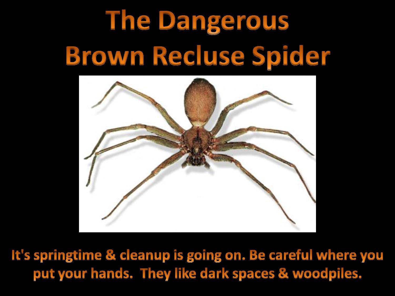 brown recluse spider bites - HD1500×1125