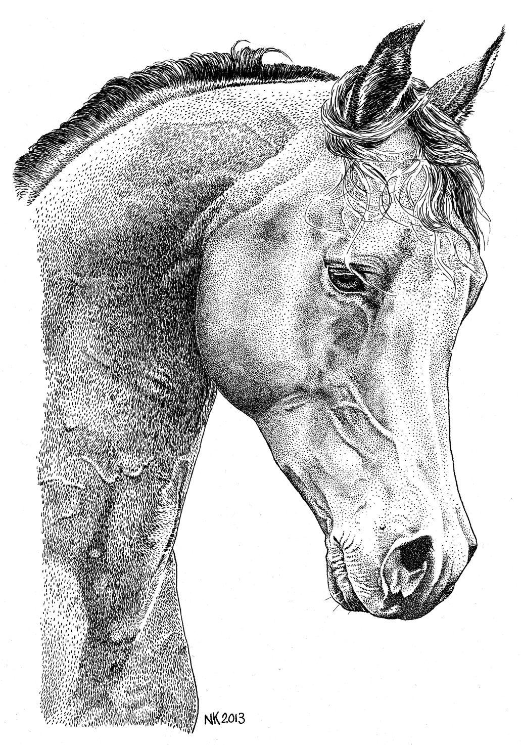Nardja Kerkmeer Portretten En Tekeningen Inkt Pentekeningen Paard Tekeningen Inkt