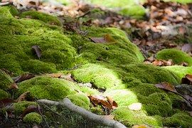 """You can """"propagate"""" moss by taking a handful of moss adding about one cup of buttermilk and one ..."""