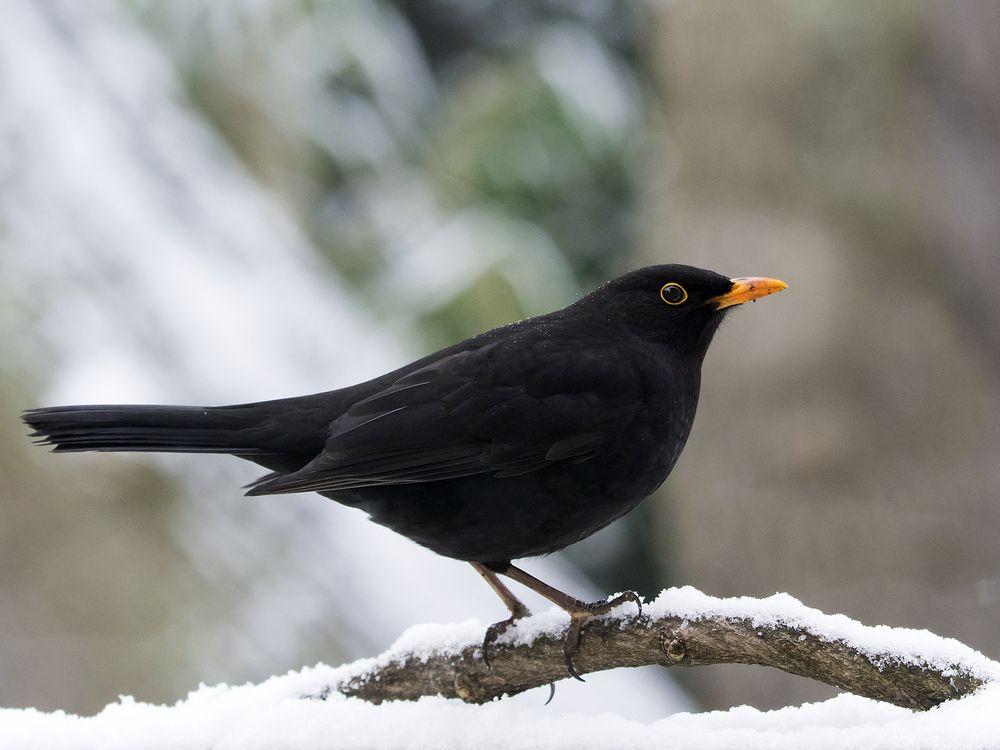 Im Garten Tiere Vogel Im Garten Natur Tiere