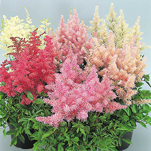 Perennials A K Horticultural Products Services In 2020 With Images Perennials Vegetable Seed Container Gardening