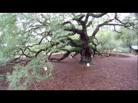 Angel Oak Tree - YouTube