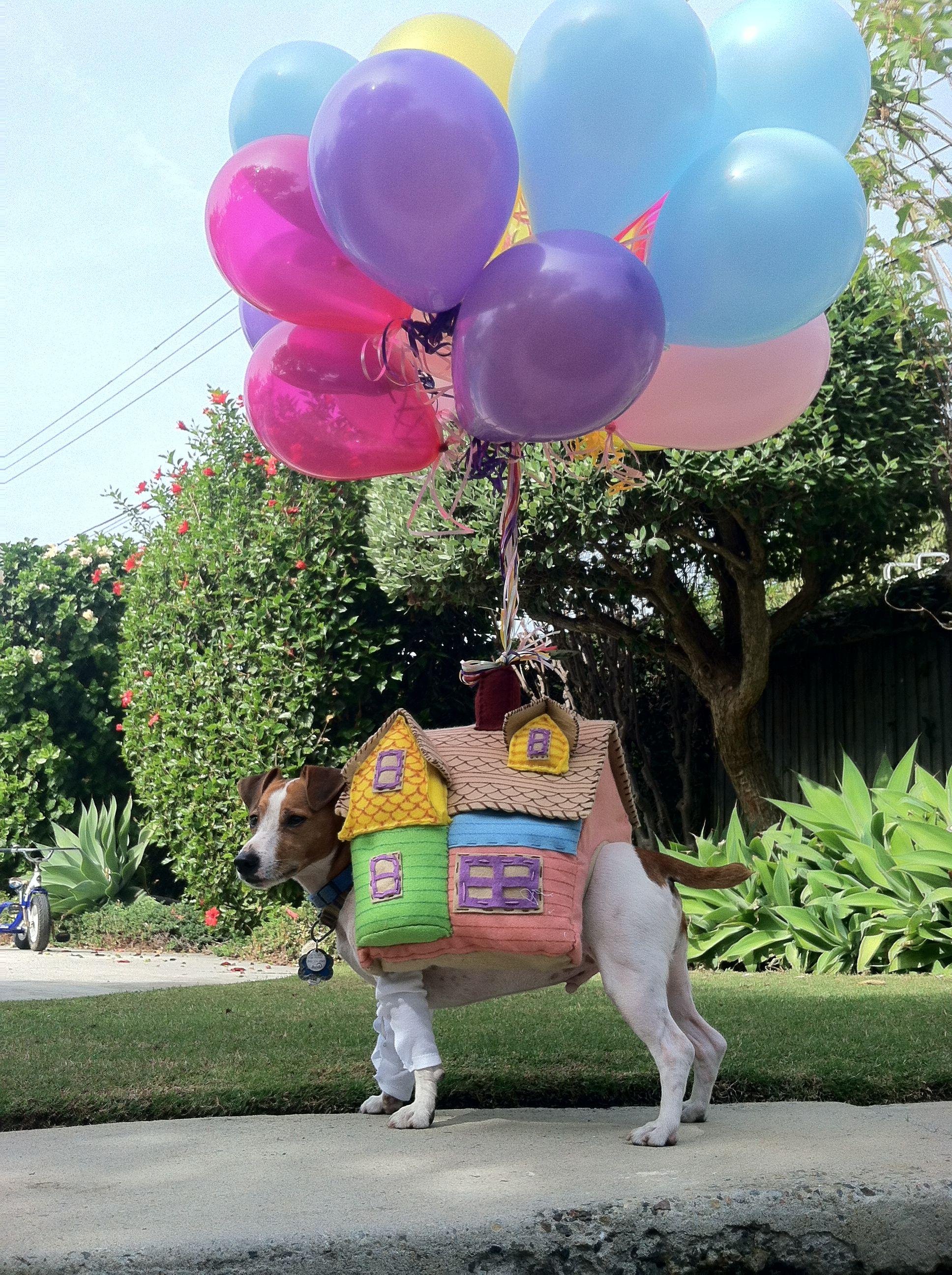 DIY Dog Costume from Disney's UP Disney dog costume, Diy