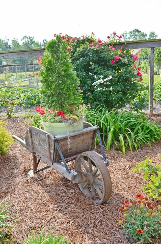 Plants In An Old Wooden Wheelbarrow | Cottage At The Crossroads
