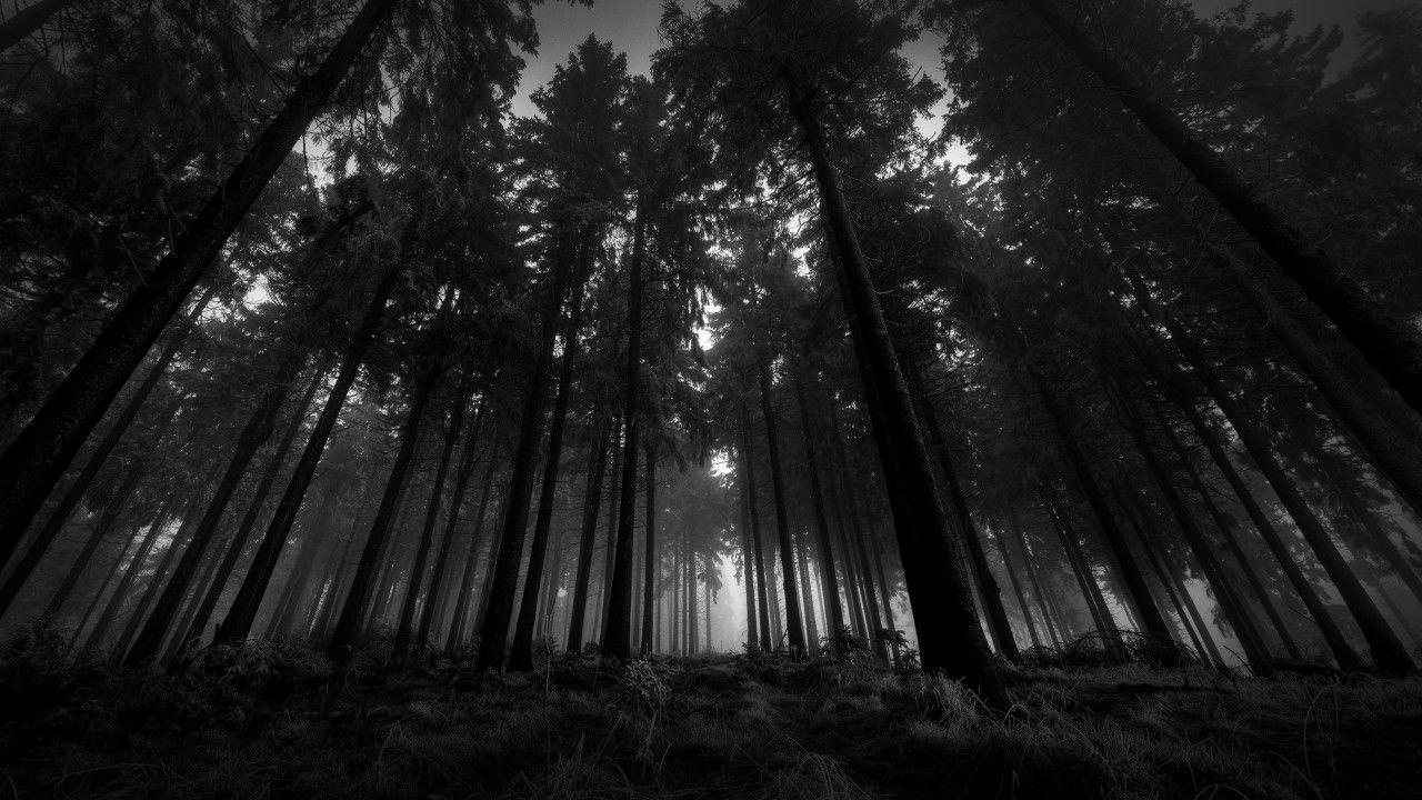 Dark Forest Wallpaper 1280x720 Jpg 1280 720 Dark Wood Wallpaper Dark Wallpaper Black And White Landscape