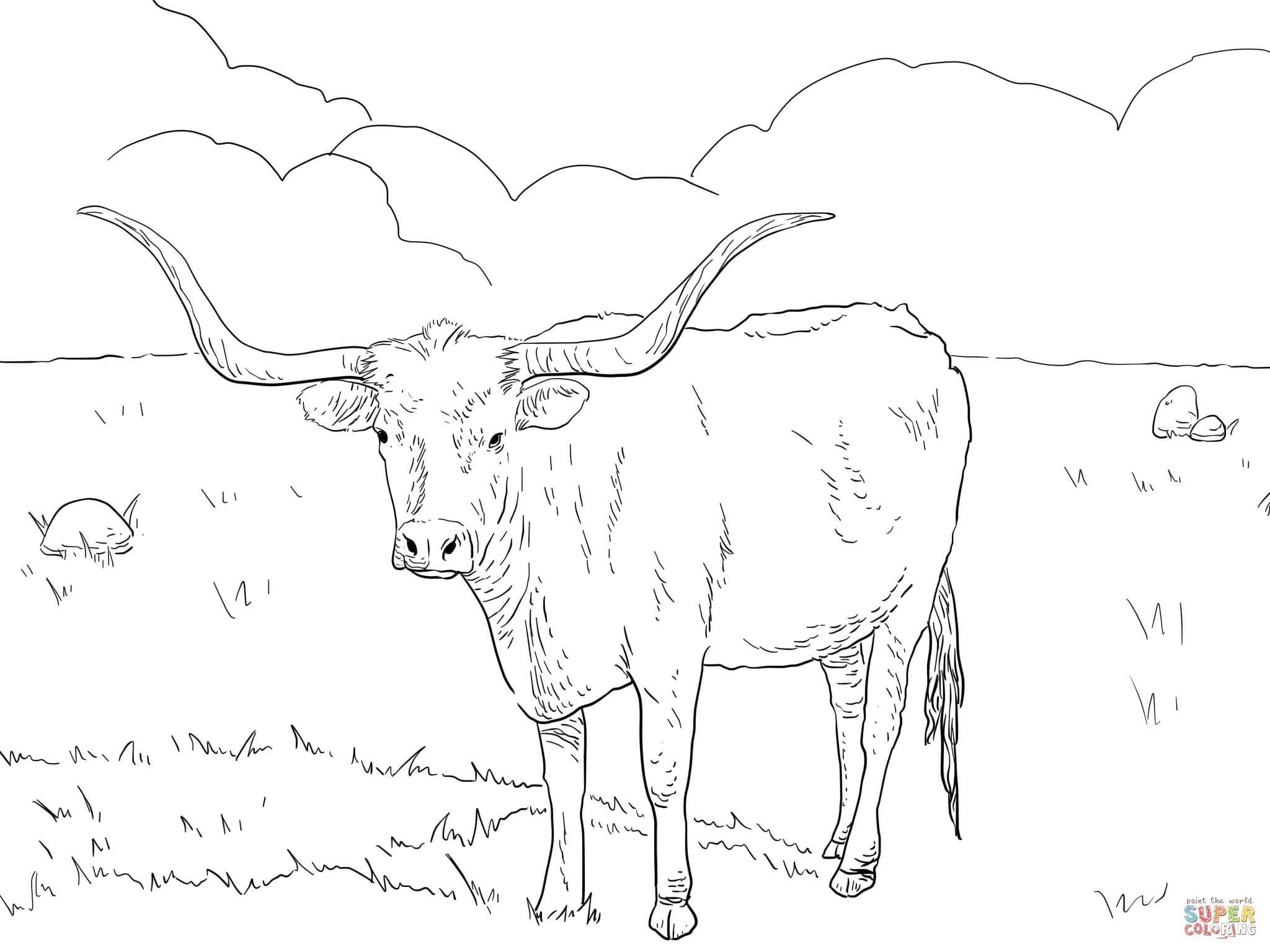 Texas Longhorn Cow Coloring Page From Longhorn Category