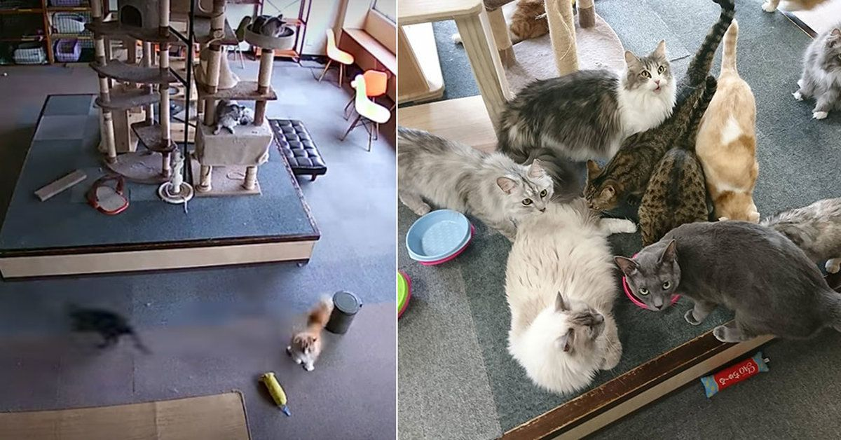 Watch A Room Full Of Cats React To An Earthquake BEFORE It