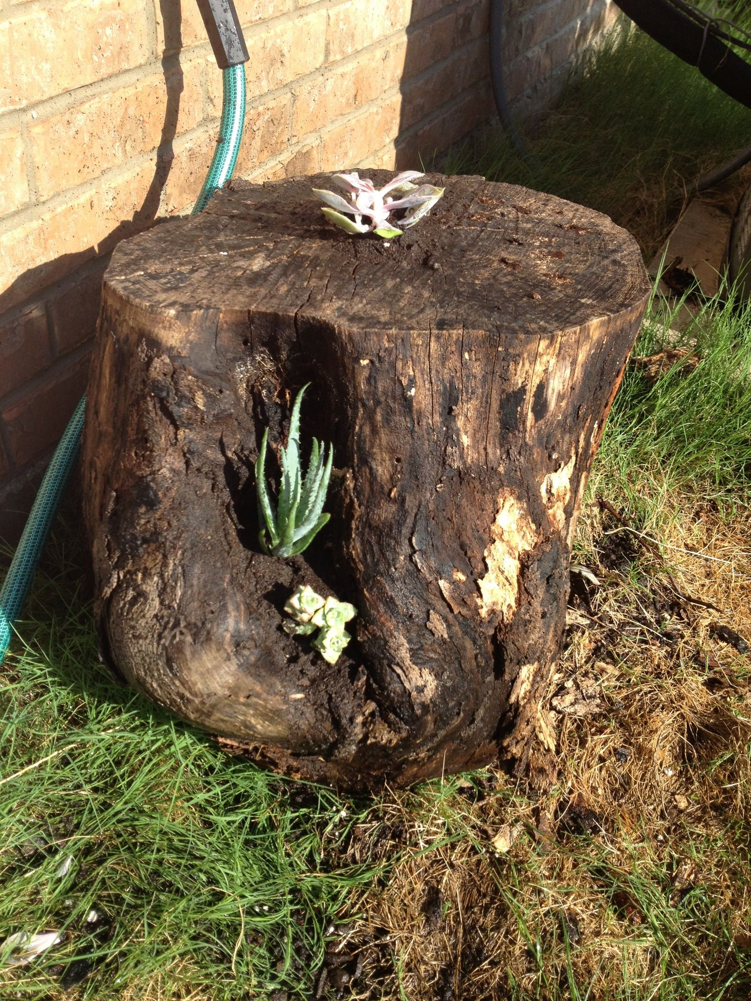 how to grow flowers in a tree stump