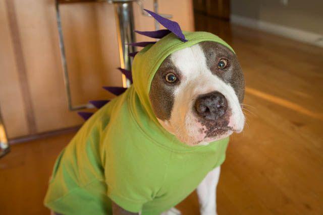 25 Adorable Diy Dog Costumes For Halloween Dog Dinosaur Costume