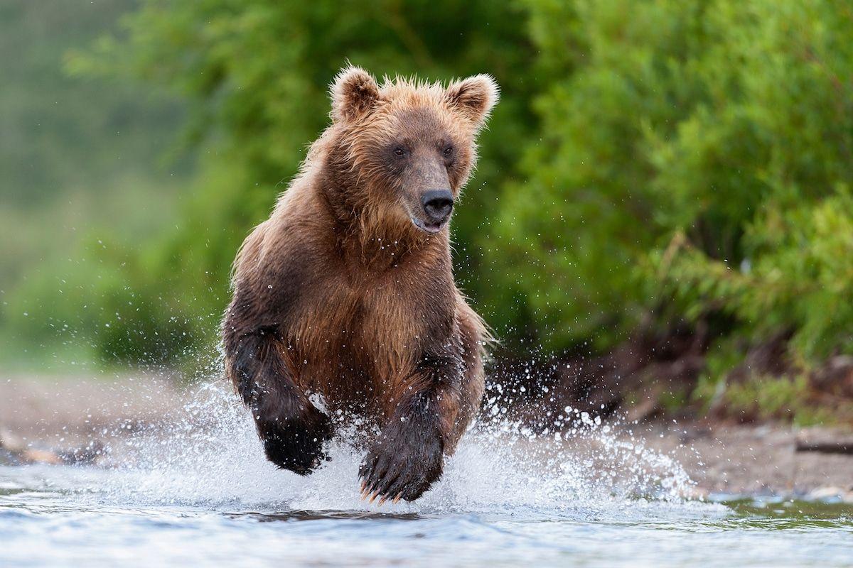 orso incontri siti di profilo di incontri