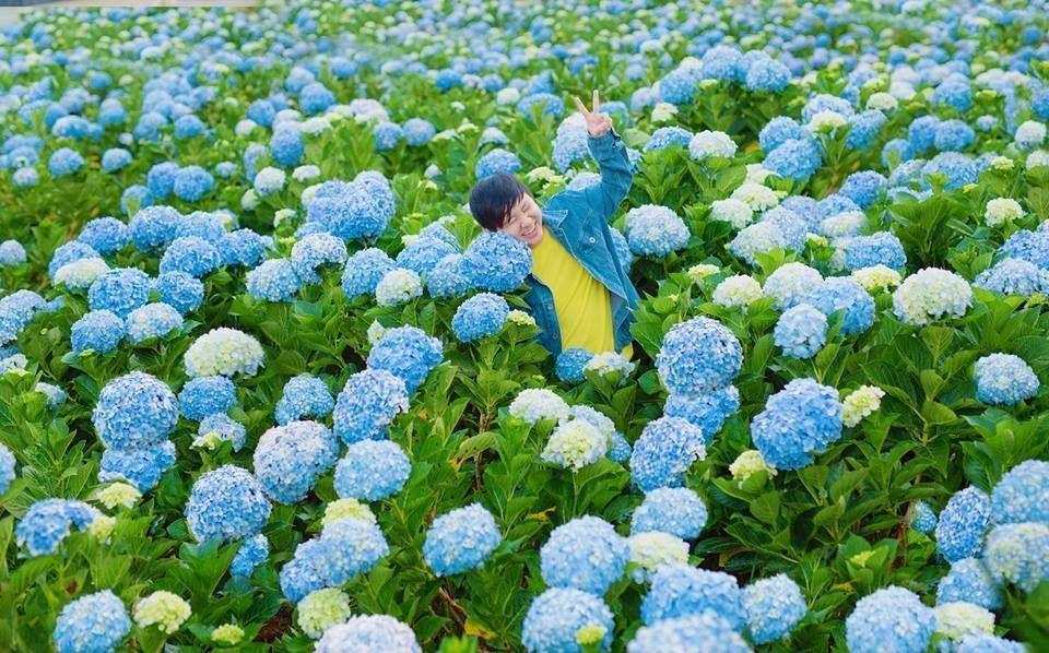 Hydrangea Flower Farm In Dalat Vietnam Photo From Dalatcitytours Dalat Dalat Dalat Dalatcitytoursdalat F In 2020 Hydrangea Flower Flower Farm Hydrangea Garden