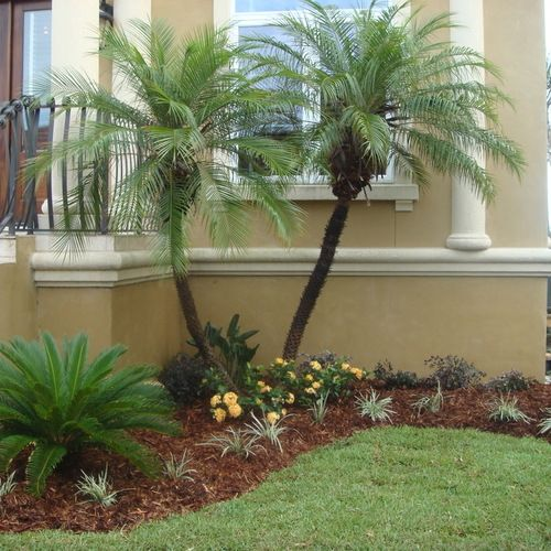 Tropical Home Garden Design Ideas: Robellini Palm Ideas, Pictures, Remodel And Decor