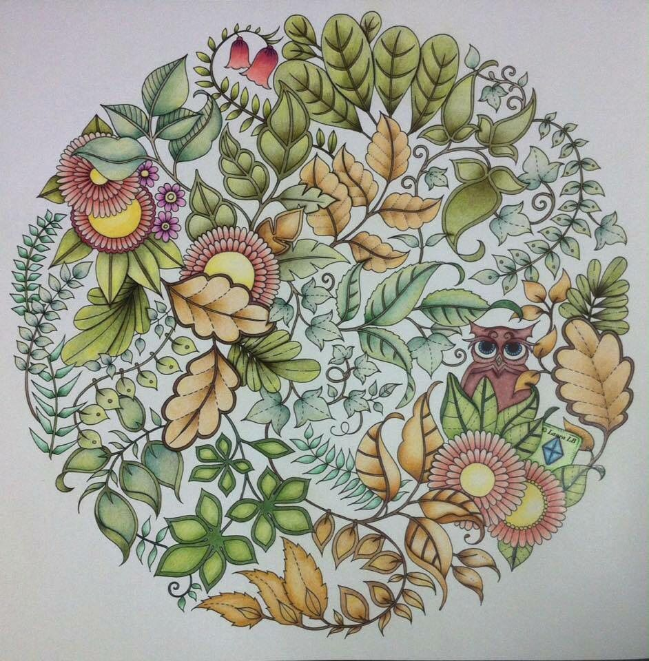 Johanna Basfords Colouring Gallery Owl Bushes Enchanted Forest