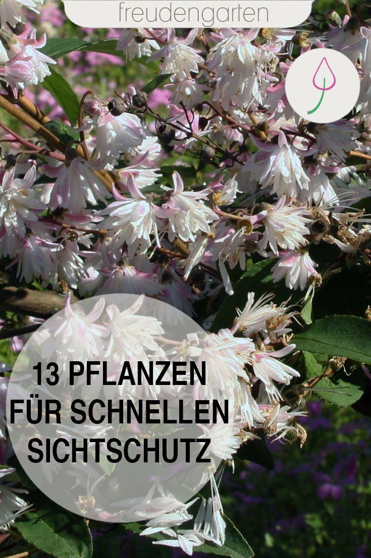 Schnell Wachsende Pflanzen Fur Sichtschutz Wachsenden Pflanzen
