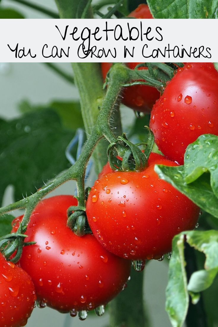7 Vegetables You Can Grow In Containers Tomato 400 x 300