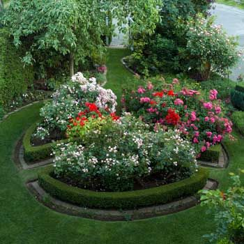 Small space rose gardens in her formal front garden for Formal front garden ideas