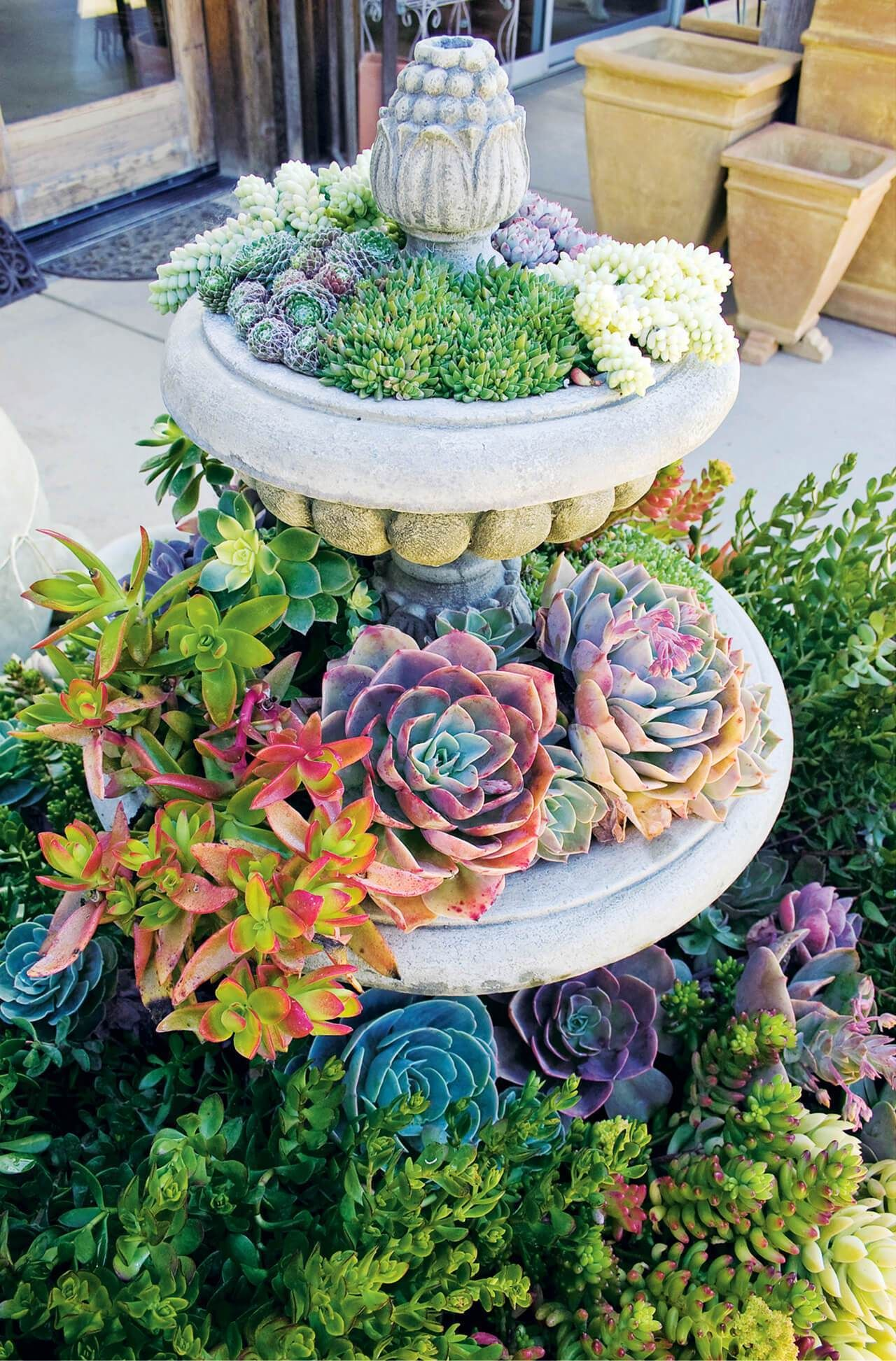 57 best succulent garden ideas with tutorials pictures on front yard landscaping ideas id=21370