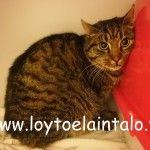Löydetyt kissat! http://www.loytoelaintalo.fi/loydetyt-kissat/