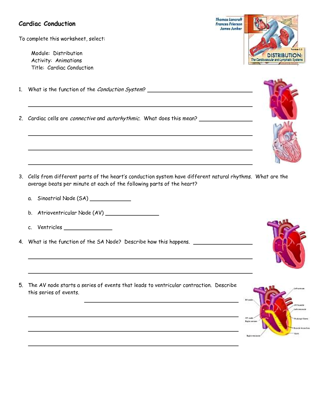 Worksheet Of Heart Conduction System