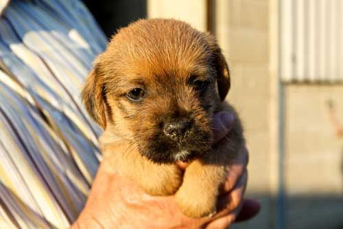Pin On Puppy Ideas Or When We Move