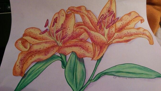 Some lilies