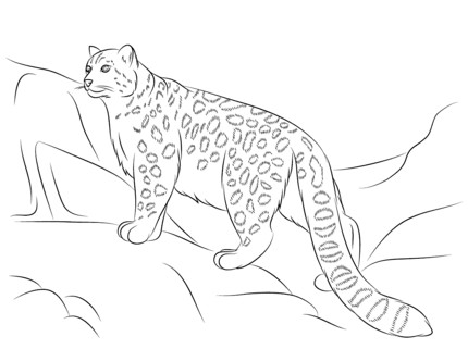 Click To See Printable Version Of Snow Leopard Coloring Page