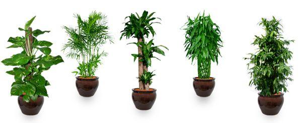 Feng Shui Plants For Good Energy Feng Shui Plants Feng