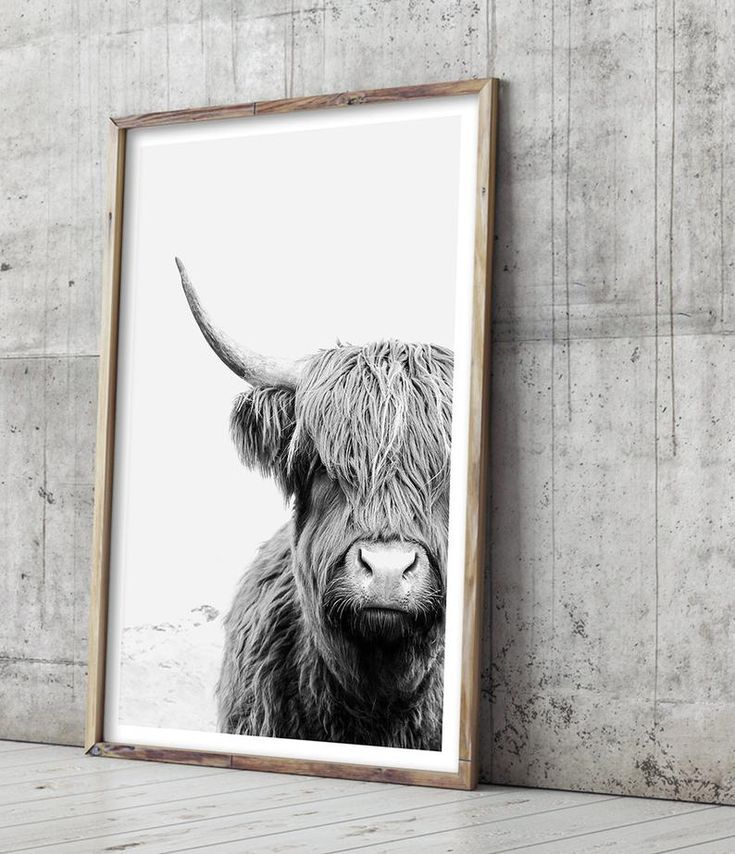 Highland Cow Print Large Wall Art Black And White Wall Art Cow Photo Animal Photography Highland Cow Art Living Room Wall Art Poster Highland Cow Print Highland Cow Art Black And