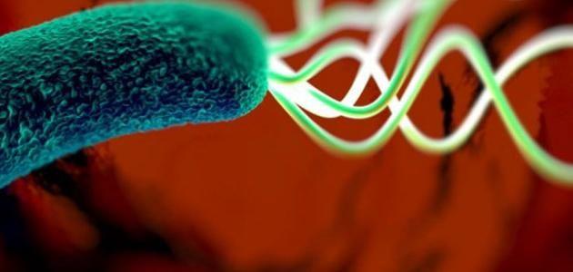 علاج جرثومة المعدة بالاعشاب مجرب علاج جرثومة المعدة بطريقة سريعة ومجربه ايضا حيث ان جرثومة المعدة من الأمراض ال Medical Information Stomach Bacteria Neon Signs
