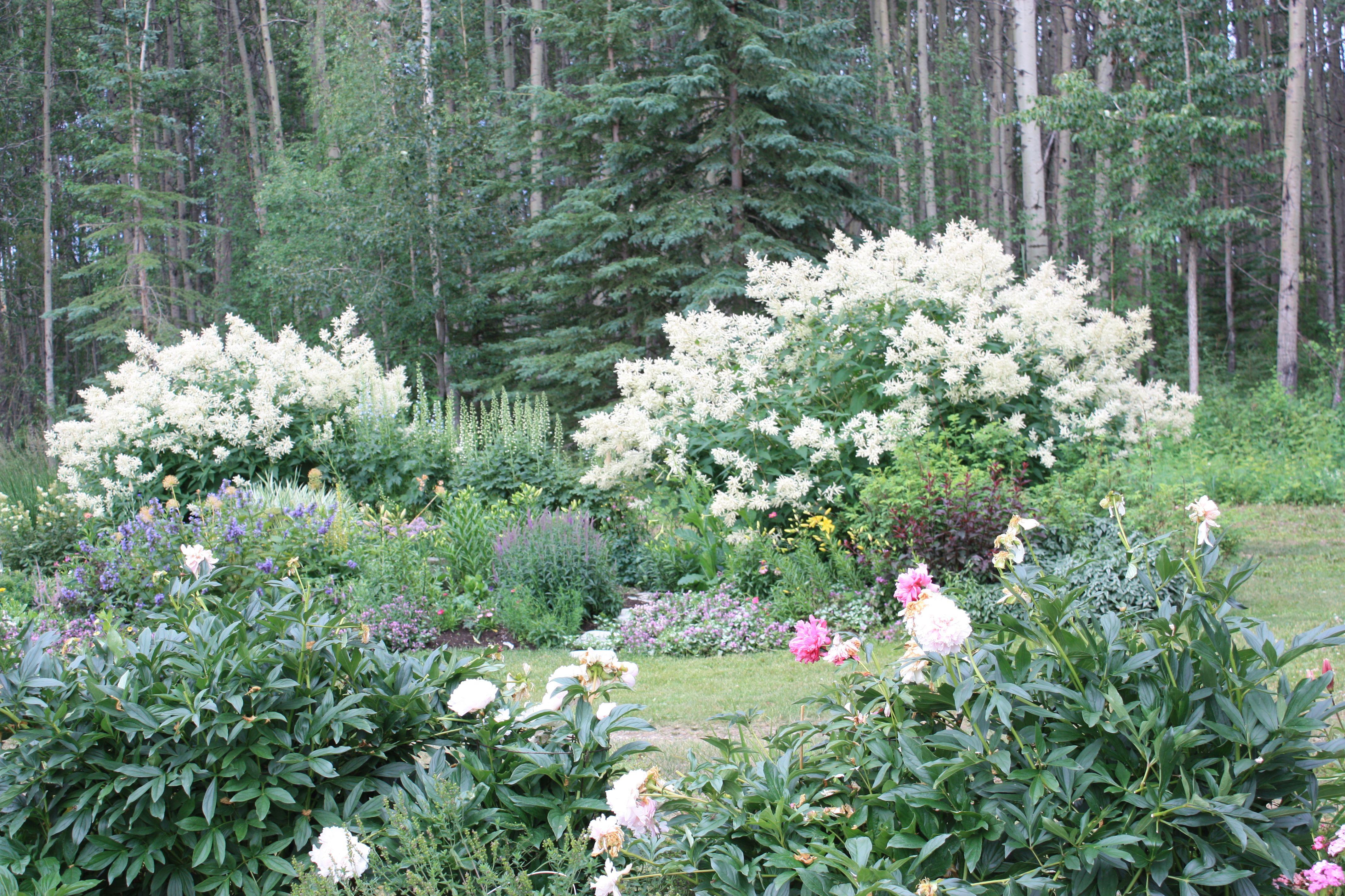 White fleece flowersnakeweed google search briar hill white fleece flowersnakeweed google search landscaping on a hill mightylinksfo