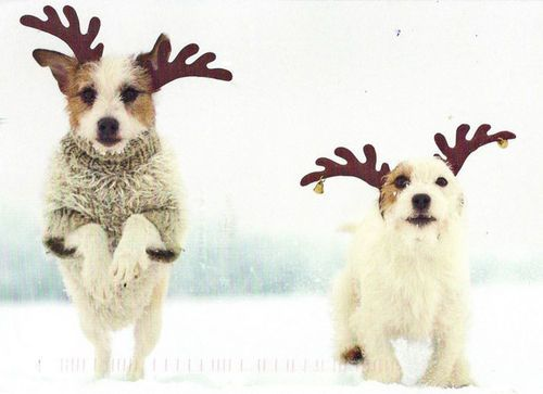 We Re The Back Ups For Donner And Blitzen Because You Never Know Christmas Animals Jack Russell Cute Animals