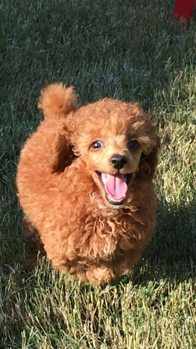I am Mason and So Happy!!! Is your fur friend happy????                                                                                                                                                                                 More
