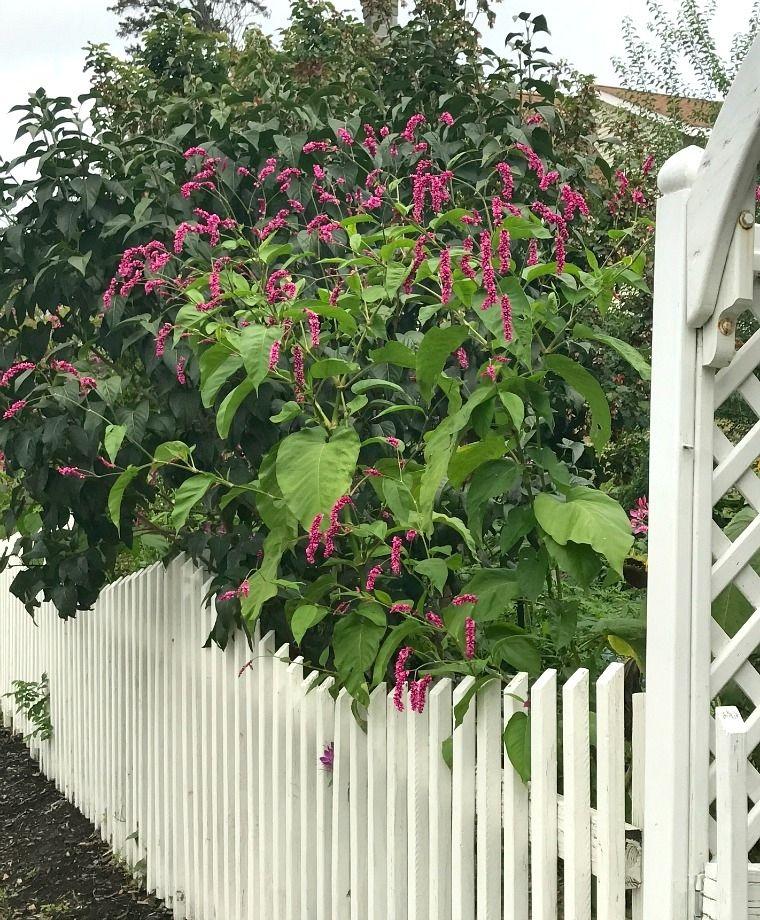 Kiss Me Over The Garden Gate John Scheepers Kitchen Garden Seeds Garden Gates Garden Inspiration Pnw Garden