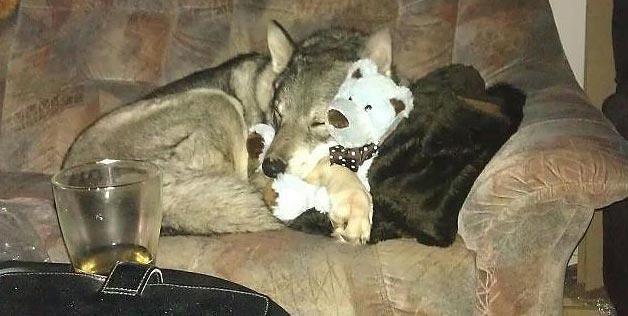 doggy with his teddy bear