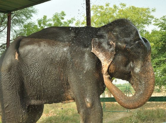 Big Guy is HAPPY to be FREE after 50 years in chains!