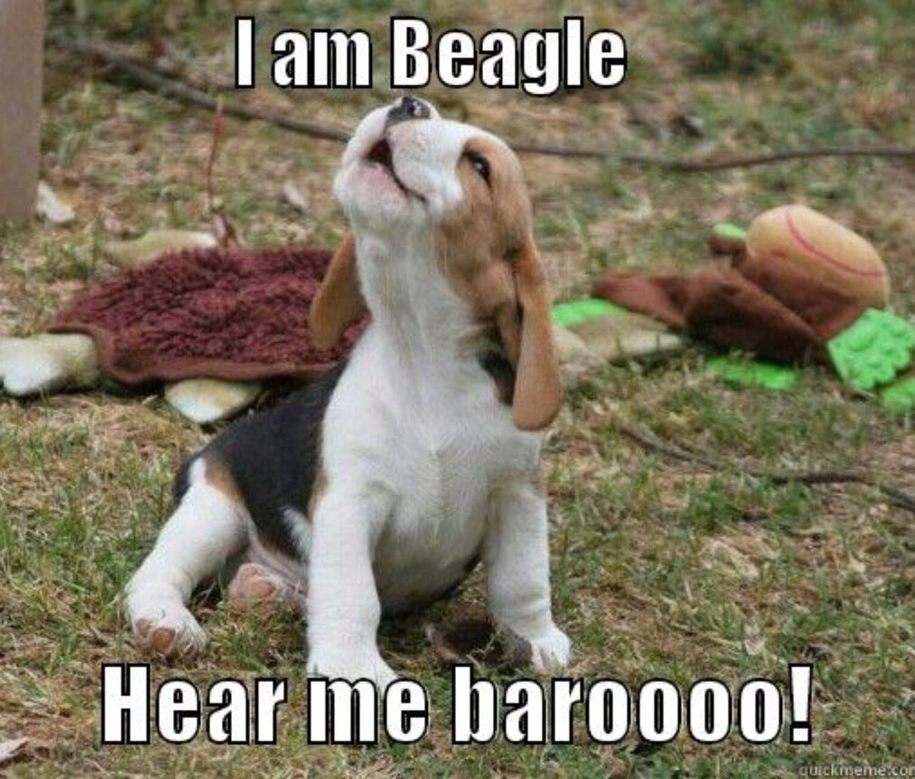 Get A Beagle They Said It Ll Be Fun They Said It Totally Was