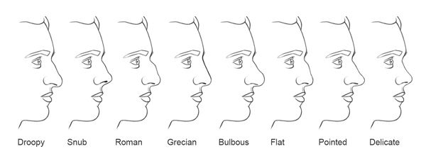 nose types | Nose types, Nose shapes, Different nose shapes