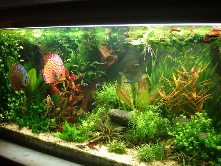 Aquascaping Galerie - Aquascaping Forum | Aquascape ...
