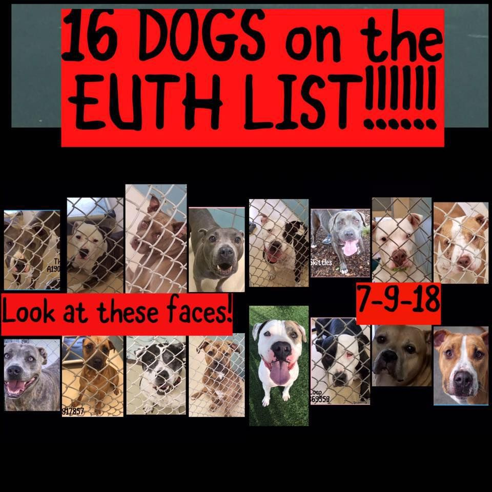 Help Tampa Florida Pleaseshare 16 Dogs On Euth List Please