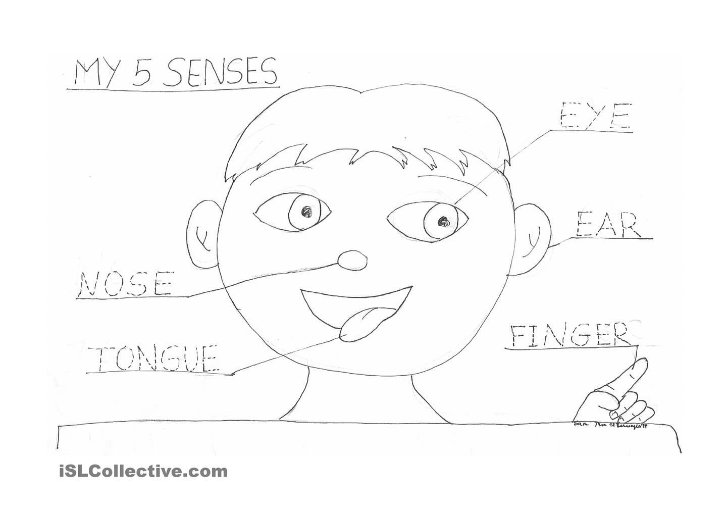 5 Senses Coloring Pages Free