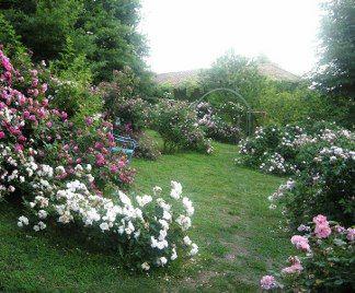 Giardino di rose giardino pinterest rose