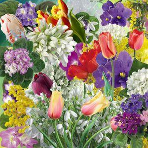 spring flowers | Blooming-Spring-Flowers