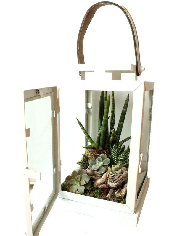 la grande lanterne de verre en automne les contes de verre composition de plantes grasses. Black Bedroom Furniture Sets. Home Design Ideas